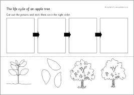 apple tree cycle sequencing sheets work on writing
