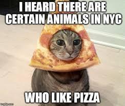 Rat Meme - ben a k a the pizza rat lipstick alley