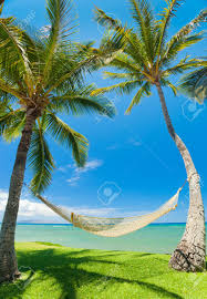 tropical palm trees and hammock stock photo picture and royalty