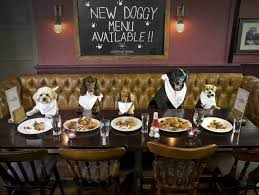 dogs at dinner table bone appetit restaurant launches menu just for dogs