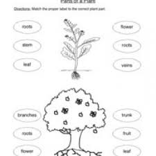 plant worksheets have fun teaching