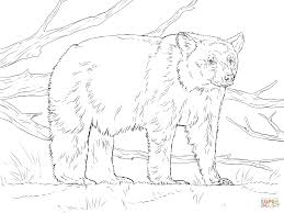 realistic american black bear coloring free printable