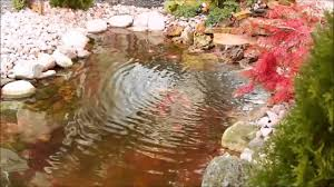 backyard koi pond design ideas youtube
