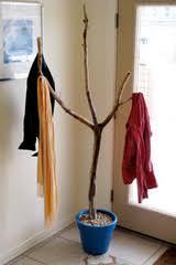 turn a fallen branch into a coat rack