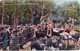 southern california u0027s first amusement parks ostrich farms kcet