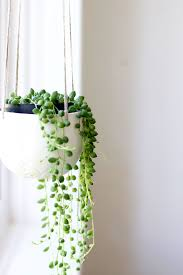home decor plants decor home decor plant decoration idea luxury best in home decor