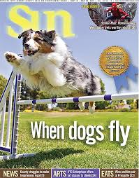 australian shepherd kennel club when dogs fly locals train their pets and prepare for american