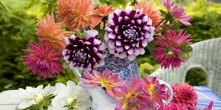 blooms flowers summer flowers the most popular blooms for every month