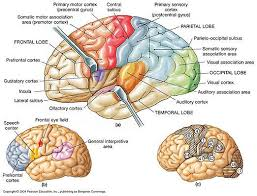 Anterior Association Area Anterior Insula And Epilepsy Quantum Mind
