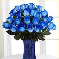 white and blue roses this beautiful combination of a single and white sends