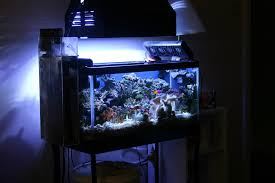 55 gallon aquarium light t5 powered 55 gallon sps heavy tank build reef central online