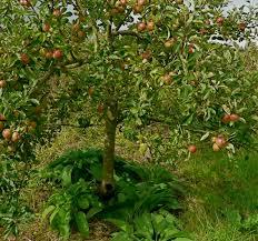 the 25 best fruit garden ideas on pinterest buy fruit trees