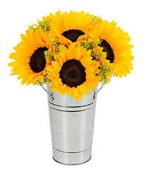 sunflower delivery fresh sunflower harvest at from you flowers