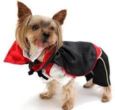 Chihuahua Halloween Costume Chihuahua Halloween Costumes Chihuahua Costumes Halloween