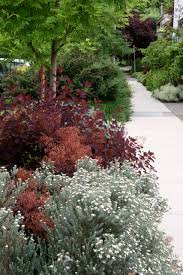 plum and silver landscaping gardening white flowers sidewalk