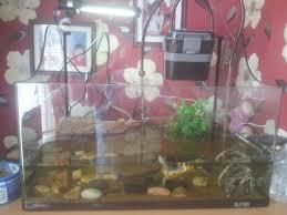 here i have for sale my exo terra turtle terrarium preston