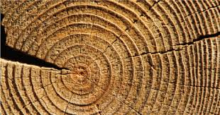 tree rings images Apologetics press did the trees of the garden of eden have rings png