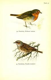 14 best ca high desert birds seen in my yard fall or winter