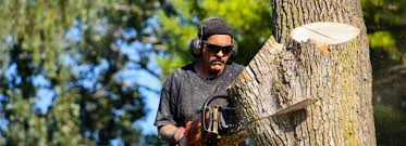 tree removal long island full range of tree services in long