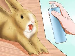 how to introduce rabbits 10 steps with pictures wikihow