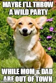 mischievous corgi meme generator imgflip