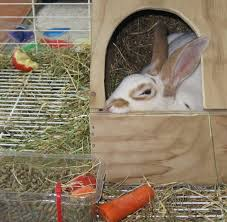 rabbit kindling box appletons animal housing and poultry supplies