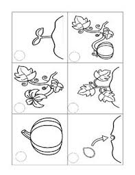 life cycle of a pumpkin worksheet free worksheets library