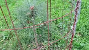 starting a backyard tree nursery thenurseries