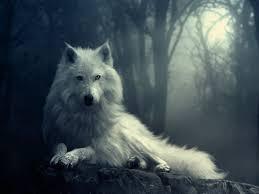 imagenes de fondo de pantalla lobos fondos de pantalla de lobos en movimiento fondos de pantalla