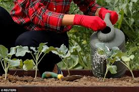 melania takes over michelle obama u0027s healthy eating garden daily