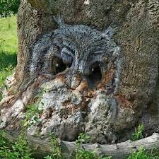 message of owl shows up in tree matrix harmonics