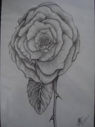 simple elegant rose drawing by tonya hoffe