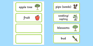 Words Cards Apple Tree Life Cycle Word Cards Word Cards Words Cards Key