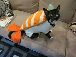 Pet Cat Halloween Costumes My Friend Creates Homemade Halloween Costumes For Her Cat