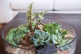 succulent arrangements succulent arrangements big sun