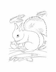 pages wild rabbit printable to color free zoo for kids free