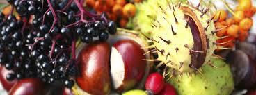 edible fruits garden design edible landscapes ecologia design 240 344 5625