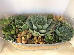 succulent plant complete arrangement in galvanized planter with