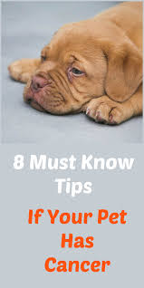 my pet has cancer 8 must know tips for comfort and care