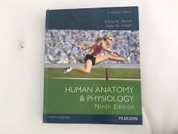 Human Anatomy And Physiology Marieb 7th Edition Human Anatomy And Physiology Marieb Hoehn Books Gumtree