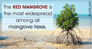 15 really captivating facts about the mangrove tree