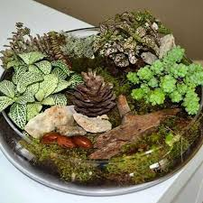 images tagged with themedterrarium on instagram
