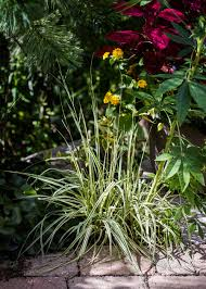 benefits of small ornamental grasses garden