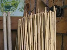 bamboo canes grown in oregon make natural garden stakes using
