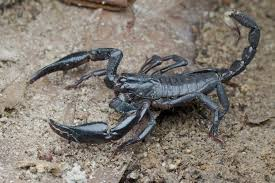 venom as medicine how spiders scorpions snakes and sea