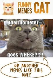 Funny Cat Memes - funny cat memes 2017 android apps on google play