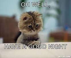 Good Cat Meme - oh well have a good night cat meme ilove messages