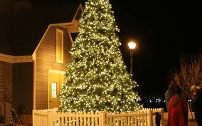 most popular christmas tree lights the best christmas tree in every state people com