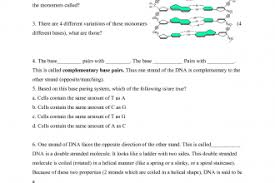 dna rna worksheet free worksheets library download and print
