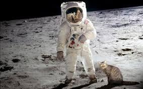 cat astronaut wallpaper pics about space